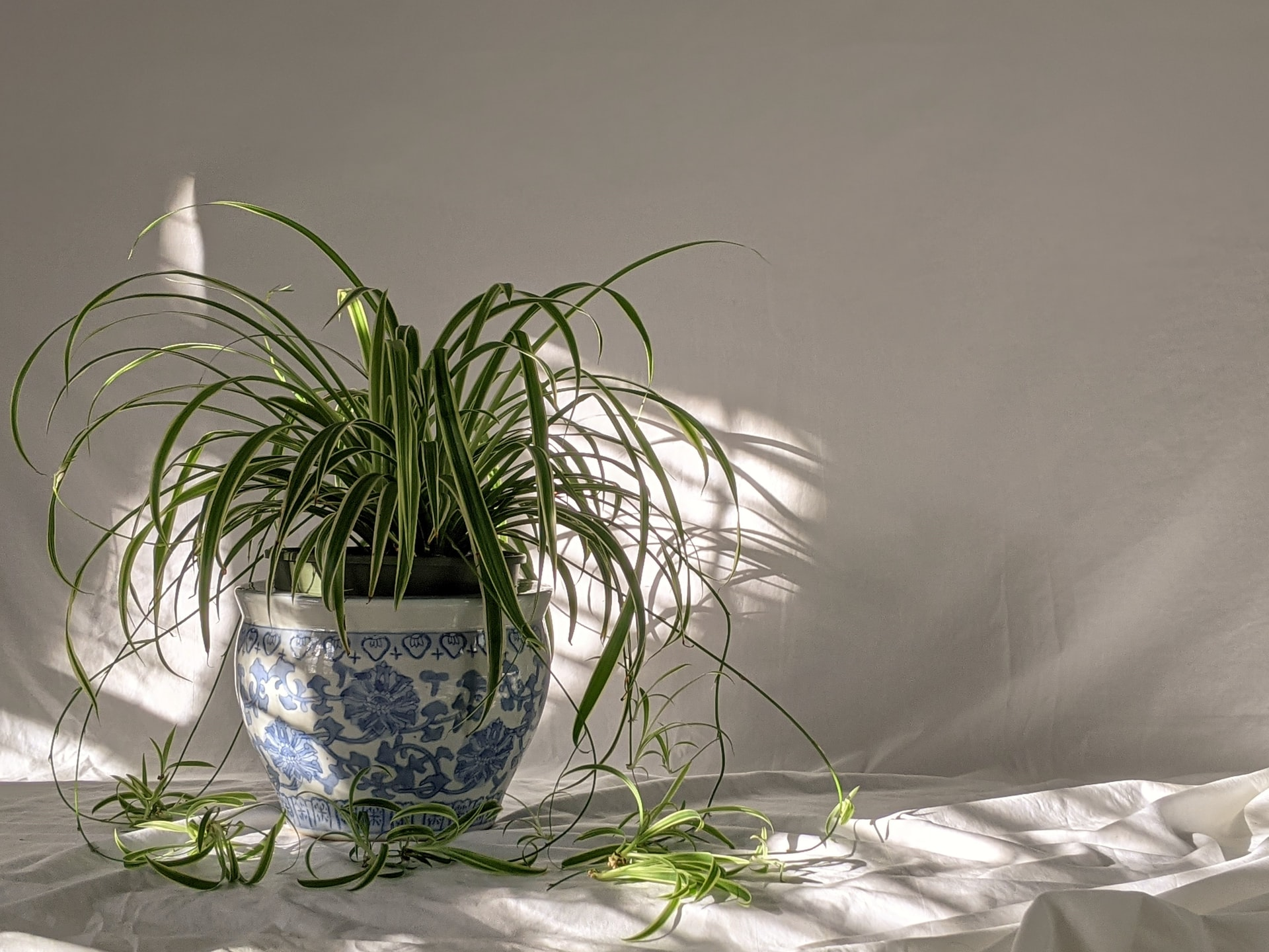 thumbnail image for blog Apartment-Friendly Houseplants to Add to Your Must-Grow List